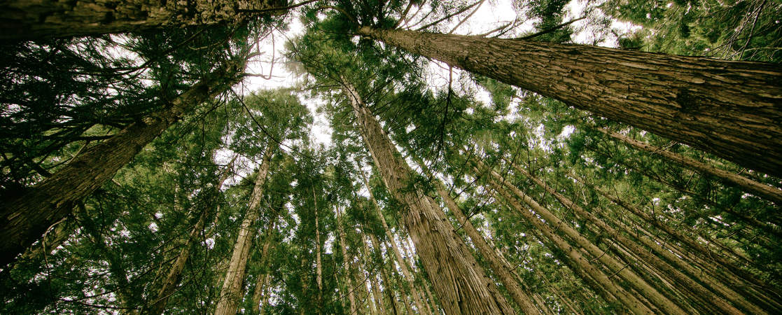 Forest Stewardship Council® (FSC®) Certified